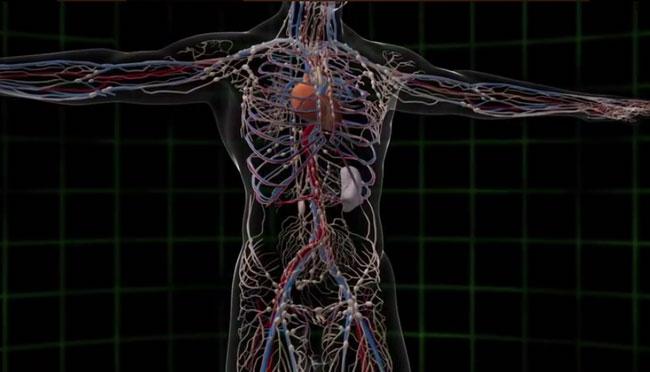 Fysiologie van Qigong - Uitgelichte afbeelding - Yvonne Alefs