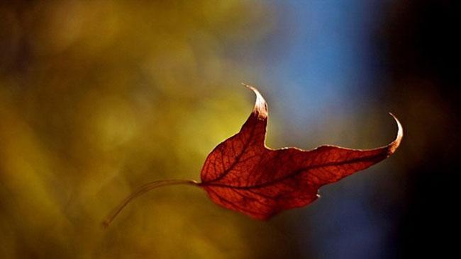 Herfst en de energie van de longen - uitgelichte afbeelding - Yvonne Alefs