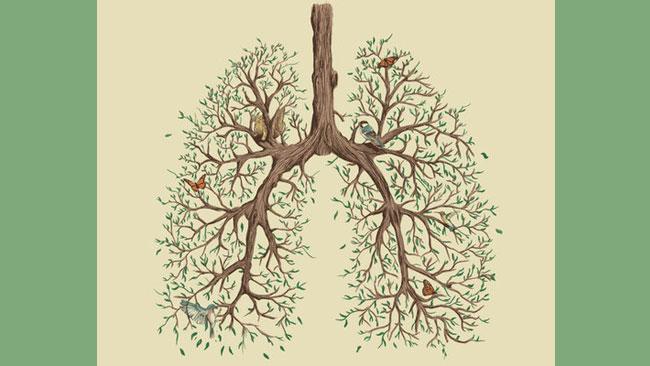 Herfstkracht van de longenergie - uitgelichte afbeelding Yvonne Alefs
