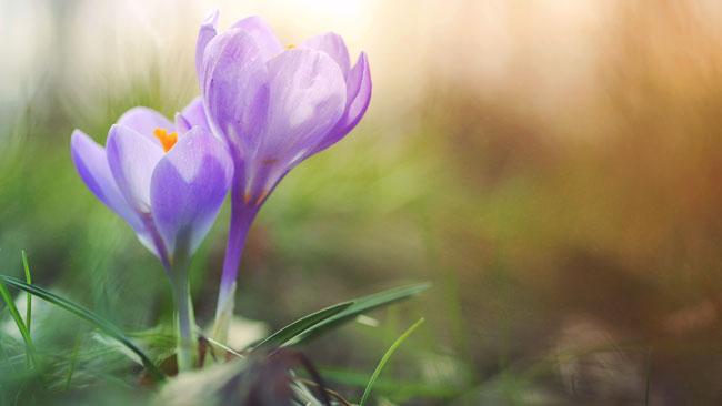Leven in het ritme van de lente - Qigong blog Yvonne Alefs